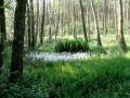 Nasze lasy. Fot. Adam J. Karpiński
